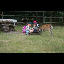 Wölflingsaktion im Tierpark Frankenberg<br/>Rehe konnten gefüttert werden