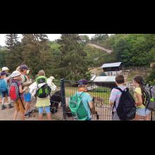 Wölflingsaktion im Tierpark Frankenberg<br/>Bergziegen haben wir auch gesehen