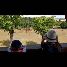Wölflingsaktion im Tierpark Frankenberg<br/>Bei der Fütterung der Hirsche waren wir auch dabei
